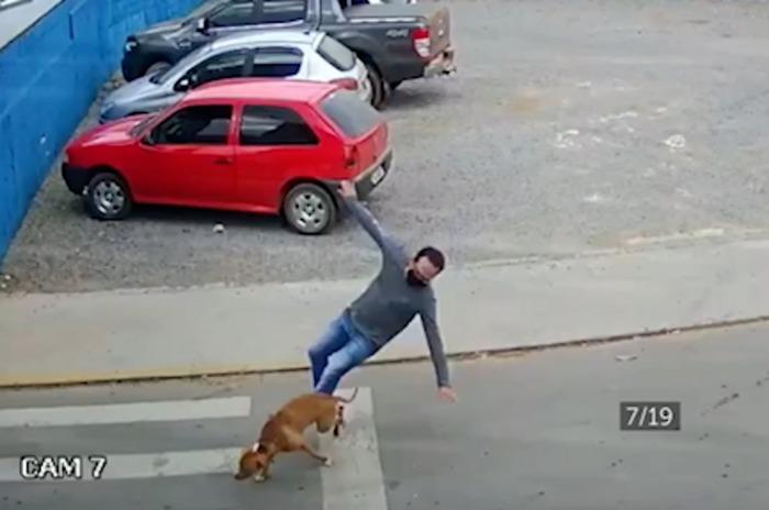 Homem é atropelado por cachorro em alta velocidade; veja o vídeo