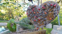 """Aves do Refúgio Biológico da Itaipu ganham """"almoço especial"""" no Dia dos Namorados"""