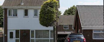 Homem poda árvore ao meio para encerrar discussão com vizinho