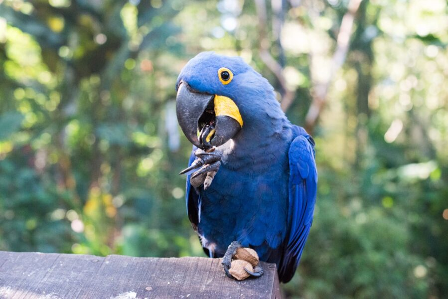 Parque das Aves proporciona cuidados especiais aos animais no inverno