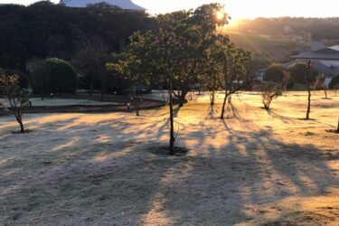 Geada no Paraná: quarta-feira amanhece com paisagens congeladas no estado; veja