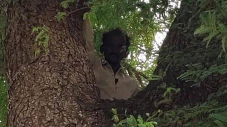 Homem com medo de vacina contra a Covid-19 sobe em árvore e se recusa a descer