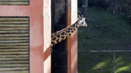 Zoológico de Curitiba terá visitas de carro a partir de terça-feira (15)