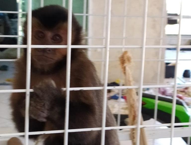 Macacos-prego, araras e papagaio são apreendidos em residência, em Curitiba