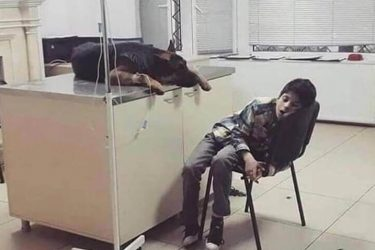 Criança dorme em clínica veterinária para não deixar seu cachorro sozinho