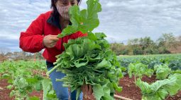Agricultores tentam evitar perdas com expectativa de geada na região de Maringá