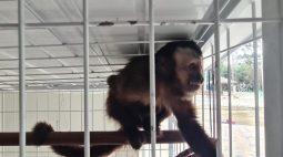 Animais silvestres mantidos em cativeiros são resgatados em Curitiba; veja vídeo