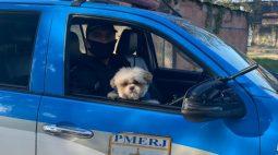Cão 'Billy' é recuperado pela Polícia Militar após ser roubado de menina de 6 anos