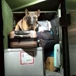 Tabletes de maconha são descobertos em malas de passageiras de ônibus, em Rolândia