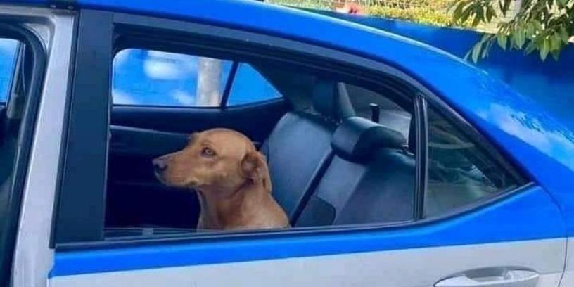 Página brinca com o meme de Cachorro caramelo preso em viatura de polícia