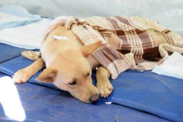 Canil Municipal de Guarapuava lança campanha para ajudar animais de rua