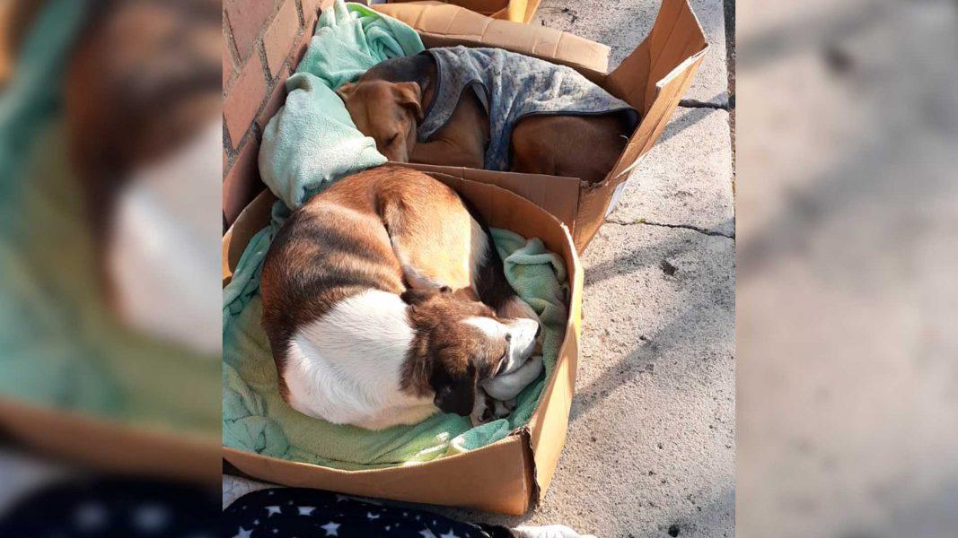 Cães abandonados no Politécnico, da UFPR, poderão ser adotados neste sábado (31)