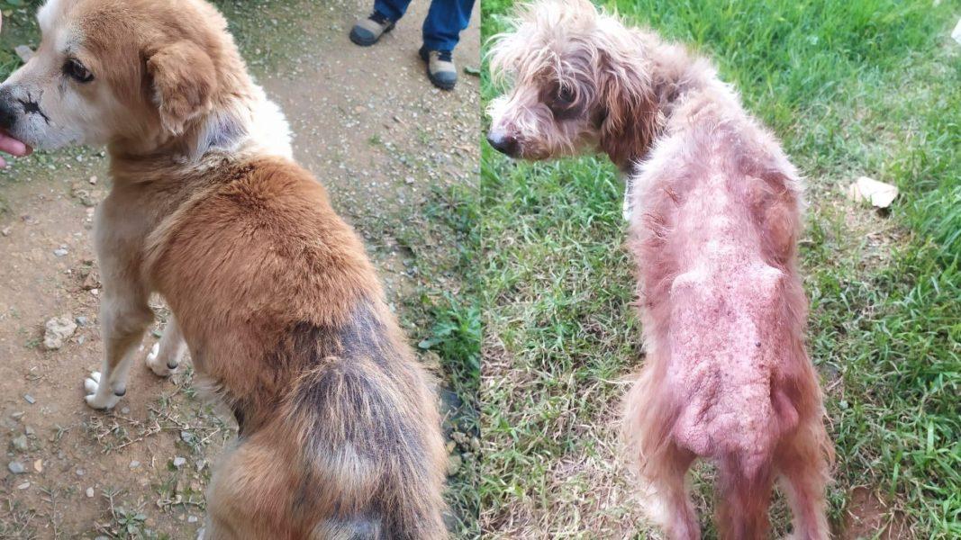 Idosa de 71 anos é presa por maus-tratos; cães estavam desnutridos e com doenças