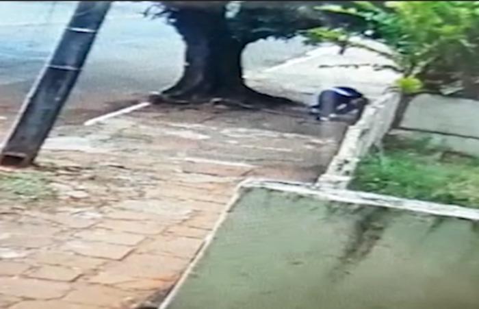 Vídeo: Ladrão quebra perna ao pular muro, depois de roubar e agredir idoso