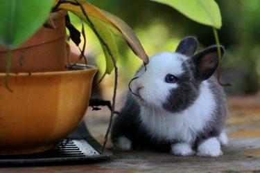 5 cuidados básicos para ter um coelho como pet