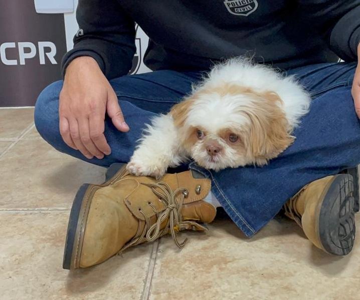 Câmeras flagram empresário arremessando cachorro por duas vezes em prédio de Curitiba; assista
