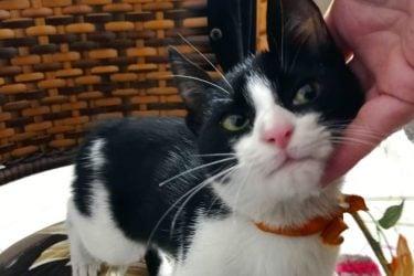 Escondido em motor de carro, filhote de gato viaja 230km após fugir