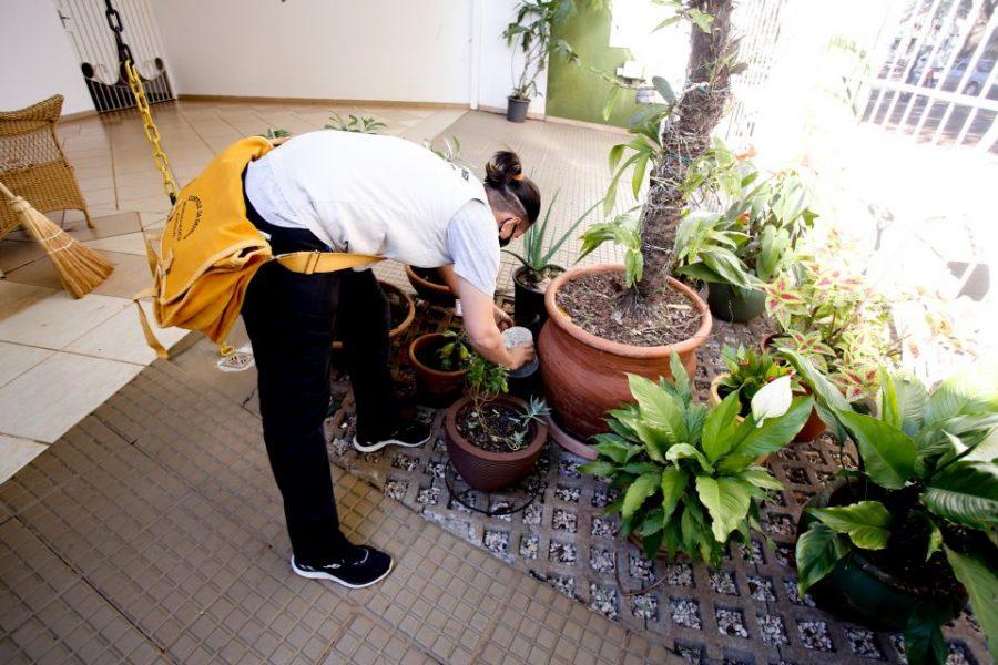 Índice de infestação do Aedes aegypti em Maringá é baixo, afirma prefeitura