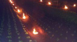 Agricultor acende fogueiras em horta e reduz efeitos da geada em Paranavaí; assista