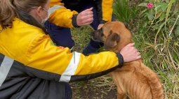 """Tutores não forneciam alimento e abrigo aos animais e cães são encontrados """"pele e osso""""; veja vídeo"""