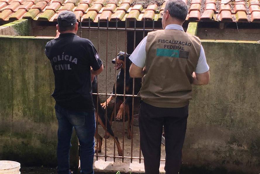 Denúncias de maus-tratos a animais aumentam em 111,6% nos primeiros cinco meses de 2021, no Paraná