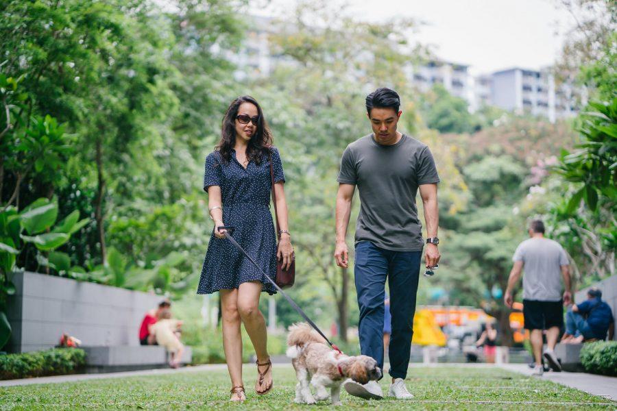Como passear com o seu cão sem estresse