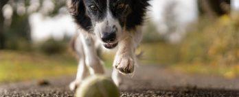 Exercícios para cães: como montar o treino ideal para cada raça?
