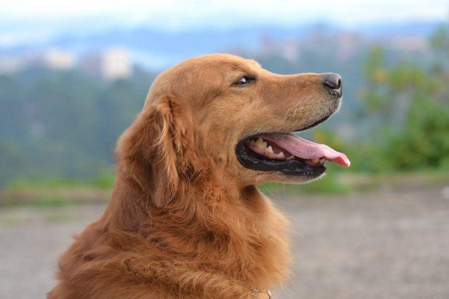 10 dúvidas comuns de tutores de cães