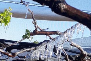 Plantações amanhecem cobertas de estalactites de gelo no Paraná; veja vídeos!