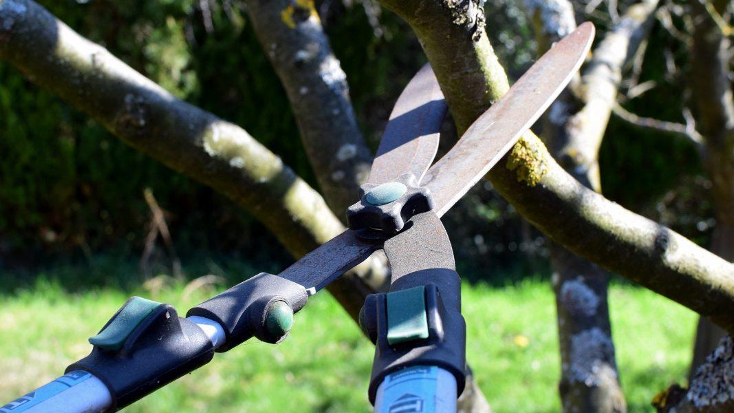 Poda de árvore causa briga entre vizinhos, em Jandaia do Sul, e PM precisa intervir