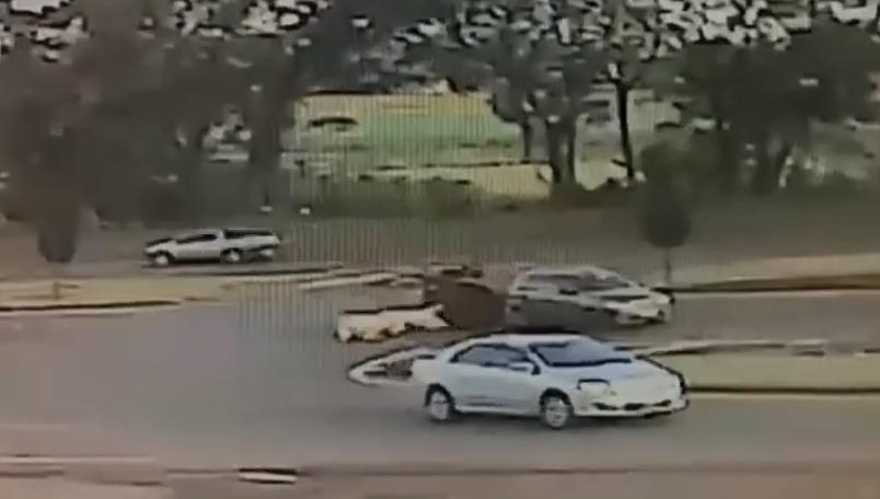 Porcos caem em meio a BR-277, após manobra irregular de motorista; veja o flagrante