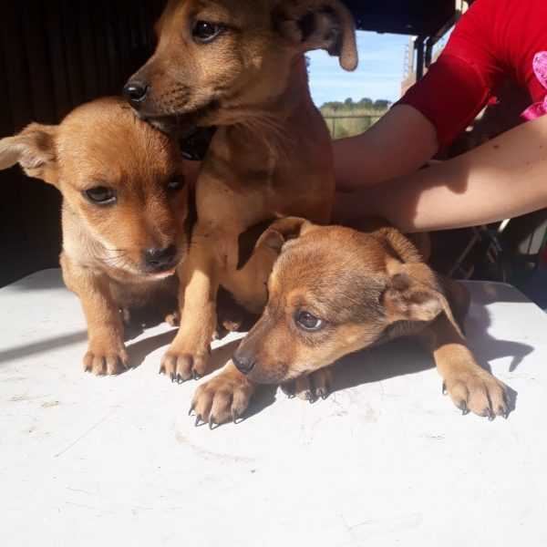 Prefeitura abre cadastro a entidades de proteção animal e protetores independentes para a distribuição de rações