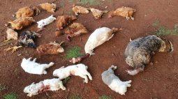 Animais são encontrados mortos, sem sangue, dentro de seminário de Toledo