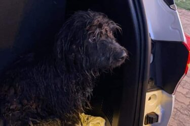 Pedreiro salva cachorro ilhado em um lago em manhã de 3ºC