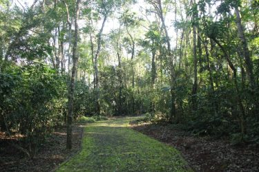 Parque Nacional do Iguaçu lança aplicativo de trilhas
