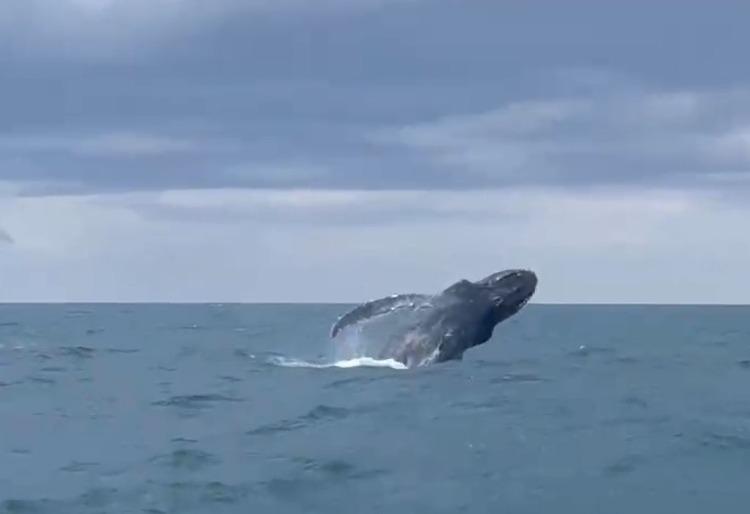 Vídeo: Baleia se exibe em Pontal do Paraná