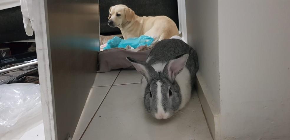 Polícia encontra coelho comendo maconha em casa lotada de drogas no Noroeste do Paraná