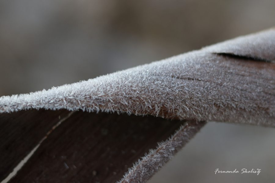 folha seca enrolada congelada