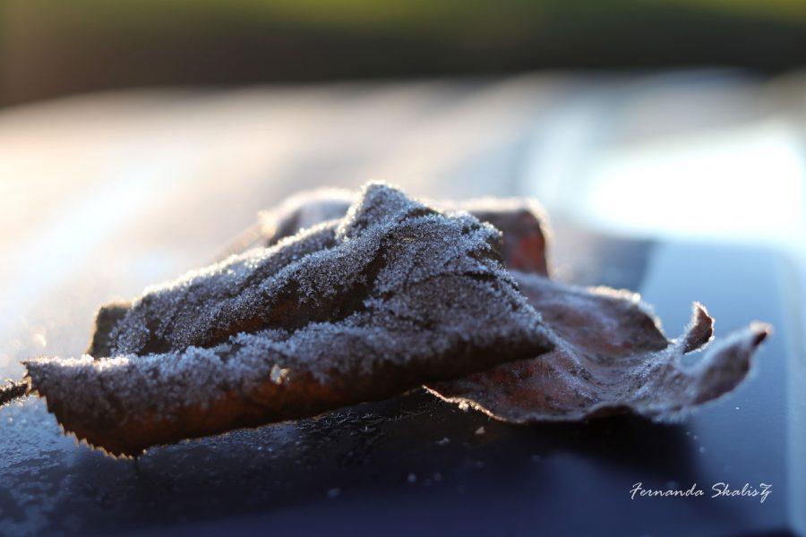folha seca congelada no chão