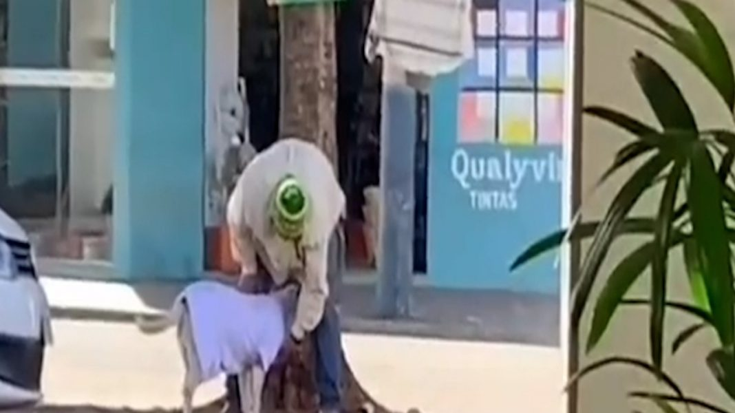 Catador de recicláveis usa roupa de varal solidário para vestir seu cãozinho; assista