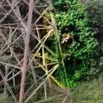 Mulher morre após se confundir e pular de bungee jump sem equipamentos; vídeo