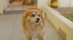 Prefeitura de Foz inicia nesta sexta (30) cadastro para castração gratuita de cães e gatos