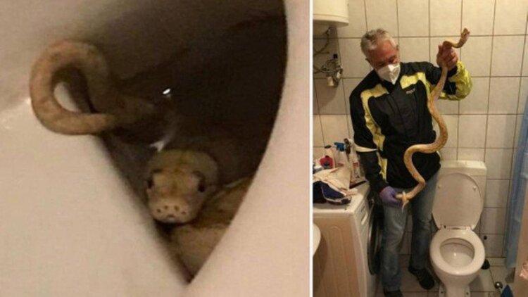 Homem é picado por cobra escondida ao sentar em vaso sanitário