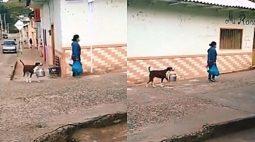 Vídeo de cachorro ajudando a tutora a carregar panelas viraliza na internet