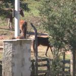 Cavalo morto em terreno gera briga de vizinhos e população pede ajuda
