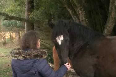 Família que encontrou cavalos perdidos doa recompensa a cadeirante que enfrenta dificuldades