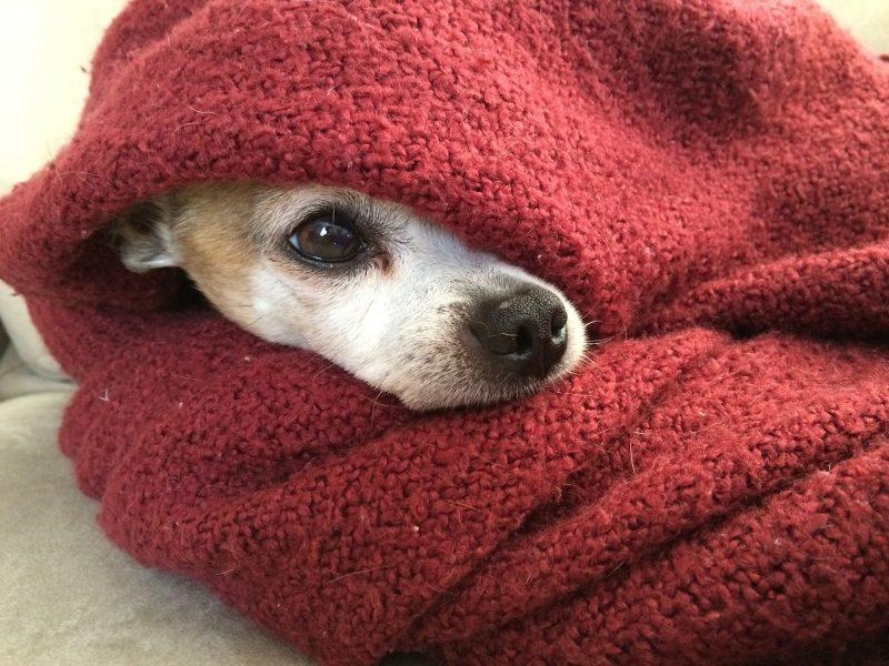Como fazer uma roupinha de frio para o seu pet