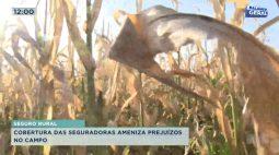 Cobertura das seguradoras ameniza prejuízos no campo após geada forte