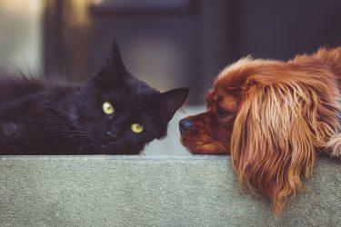 Raiva canina e felina: Como prevenir?