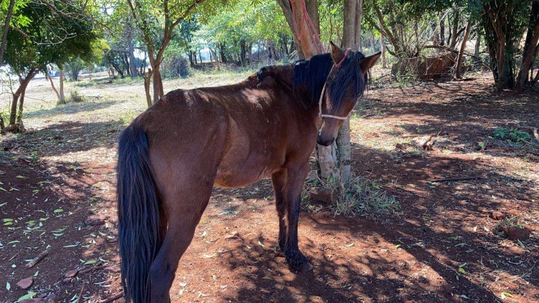 Cavalos em situação de maus-tratos são resgatados na zona oeste de Londrina